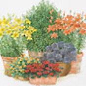 ทำนายทายทัก : ดอกไม้และต้นไม้ประจำวันเกิด