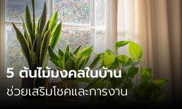 5 ต้นไม้มงคลในบ้าน ช่วยเสริมโชคและการงาน