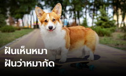 ฝันเห็นหมา ฝันว่าหมากัด หมายความว่าอย่างไร พร้อมเปิดเลขให้โชค