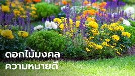 10 ดอกไม้มงคลความหมายดี ปลูกในบ้านช่วยเสริมสิริมงคล การงาน ความรัก