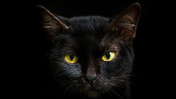 """""""แมวดำวิ่งตัดหน้า"""" เป็นลางบอกเหตุใด ?"""