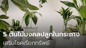 5 ต้นไม้มงคลปลูกในกระถางเล็กวางในบ้าน เสริมโชคเรียกทรัพย์