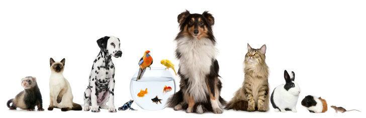 ความเชื่อเรื่องสัตว์นำโชค