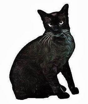 แมวหูดำตาดำ