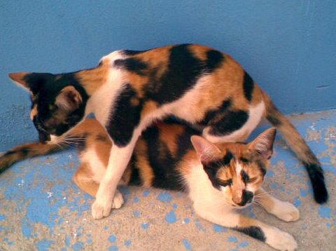 แมวสีขาวด่าง เหลืองหรือดำ