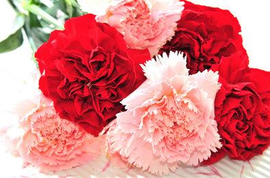ดอกคาร์เนชั่นแดง
