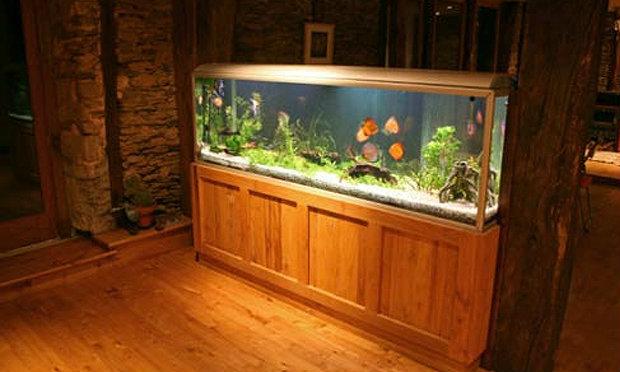 ชีวิตสุขขีได้ด้วยตู้ปลามงคล