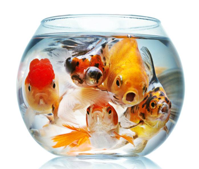 จัดตู้ปลาเสริมความรวย