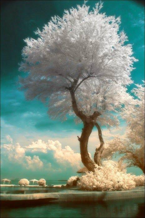 ต้นไม้ประจำวันเกิด