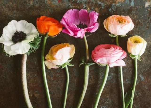 ดอกไม้สื่อรักทายใจ