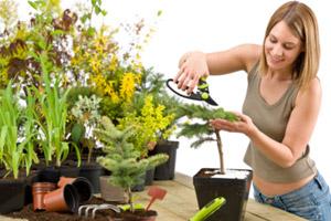 ปลูกต้นไม้ทิศไหนเป็นมงคล