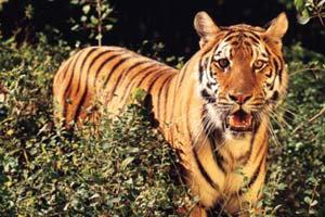 ตำนานเสือสมิง อาถรรพ์ศาสตร์มืด