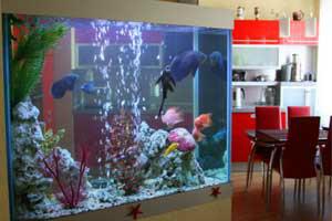 จัดตู้ปลาตามฮวงจุ้ย
