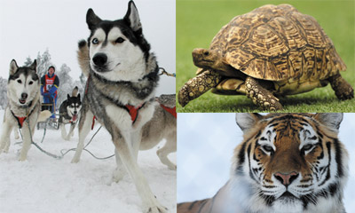 แบบทดสอบ : สัตว์อะไร...ที่นำคู่ครองมาให้คุณ