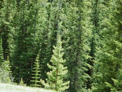 ต้นไม้ที่ปลูกแล้วอัปมงคล