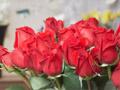 ตำนานดอกกุหลาบ