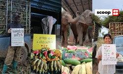 #วิกฤตช้างไทย สร้างปรากฏการณ์! แฟนๆ ทำโปรเจกต์ซื้ออาหารเลี้ยงช้างในนามศิลปิน