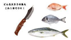 """Saka Knife"" มีดแล่ปลาที่ไม่ว่าใครๆ ก็ทำได้อย่างเชฟมือโปร"