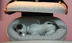 'ไอโบะ' หุ่นยนต์สุนัขตัวเดิม เพิ่มเติมคือความอัจฉริยะ
