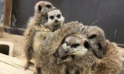ภาพความอบอุ่นท่ามกลางอากาศหนาวของเหล่าสัตว์หลากชนิดที่สวนสัตว์ญี่ปุ่น