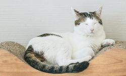 """ทาสแมวโปรดทราบ! 22 กุมภาพันธ์นี้เตรียมฉลอง """"วันแมวแห่งชาติ"""" ของญี่ปุ่น"""
