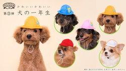 """น่ารักอ่ะ! กาชาปองหมวกน้องหมาที่มาในธีม """"นักเรียน ป.1"""""""
