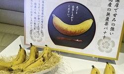 """ทานได้ทั้งเปลือก! ญี่ปุ่นเปิดตัว """"กล้วย"""" จากการลองผิดลองถูกมากว่า 40 ปี"""