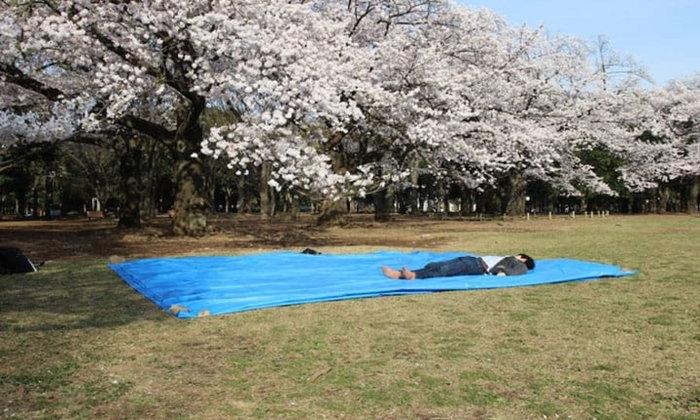 7 วิธีและมารยาทในการจองพื้นที่ชมซากุระ