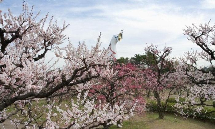 ให้มันเป็นสีชมพู! ชมเทศกาลดอกบ๊วยที่สวน Expo 70 เมืองโอซาก้า