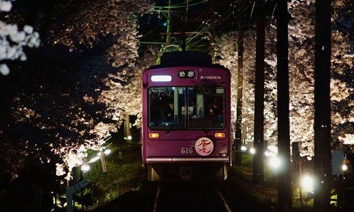 นั่งรถไฟผ่านอุโมงค์ซากุระสุดโรแมนติกยามค่ำคืนที่เกียวโต เพียง 3 วันเท่านั้น