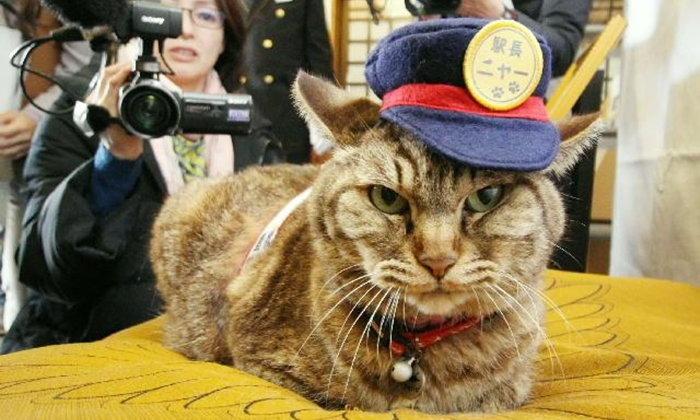 """เปิดตัว """"แมวเหมียว"""" หัวหน้าสถานีรถไฟบุงโกะทาเคตะ"""