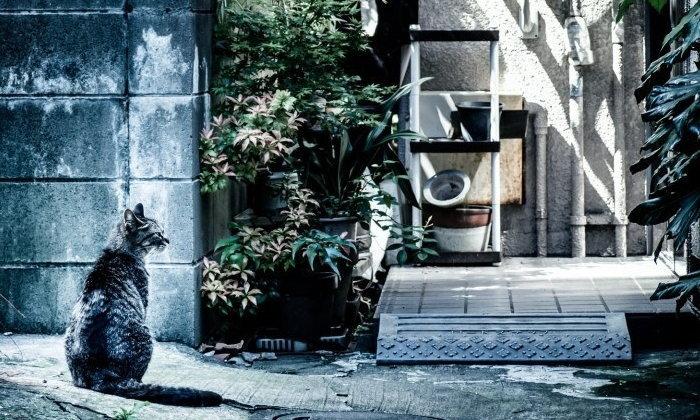 """""""วิธีตามแมวหาย"""" สุดแปลก แต่ชาวญี่ปุ่นบอกว่าได้ผลดีเกินคาด!"""