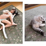 Gravure Idols are Cats