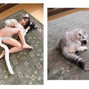 Gravure Idols are Cats