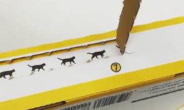 """น่ารักอะไรเบอร์นี้! ผู้รับต่างเซอร์ไพรส์เมื่อได้กล่องพัสดุจากบริษัท """"แมวดำยามาโตะ"""""""