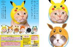 """""""กาชาปองหมวกแมว"""" ไอเทมใหม่ที่ทางแมวห้ามพลาดด้วยประการทั้งปวง"""