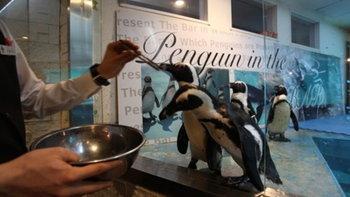 เมื่อกองทัพเพนกวินออกมาต้อนรับ ณ Penguin Bar คอนเซ็ปต์บาร์สุดเจ๋งที่โตเกียว