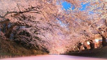 """ยังไม่สายเกิน! ชมซากุระที่ """"Hirosaki Cherry Blossom Festival"""" จังหวัดอาโอโมริ"""