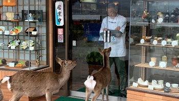"""เมื่อ """"แก๊งกวางยากูซ่า"""" ก่อกวนร้านค้าบนเกาะมิยาจิม่า!"""