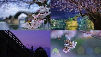 นี่ละความสวยงามของญี่ปุ่น! 4 ภาพสวยจาก จังหวัดยามากุจิ