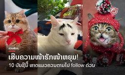 ເສີບຄວາມໜ້າຮັກໜ້າຫຍຸມ! 10 ບັນຊີນີ້ ທາດແມວຫ້າມພາດເດັດຂາດ ຕາມໄປ follow ດ່ວນ