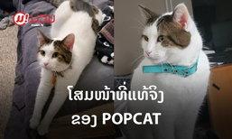 ເຜີຍໂສມໜ້າ ຕົວຈິງຂອງ POPCAT ນ້ອງໜ້າຕາເປັນແບບນີ້ເອງ