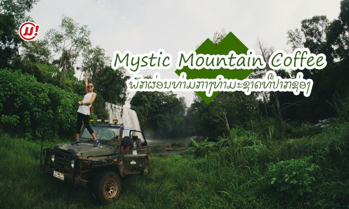 ພັກຜ່ອນຕາກອາກາດ ທ່າມກາງທຳມະຊາດສີຂຽວກວ້າງໃຫຍ່ ແລະ ສວນກາເຟ ທີ່ Mystic Mountain Coffee