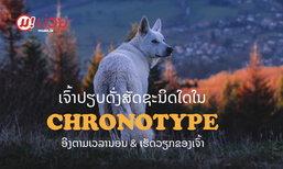 ເຈົ້າປຽບດັ່ງສັດຊະນິດໃດໃນ Chronotype ອີງຕາມເວລານອນ ແລະ ເວລາເຮັດວຽກຂອງເຈົ້າ?