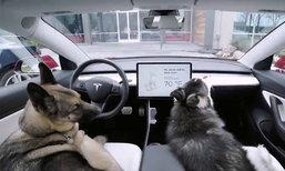 """ຄູນຄ່າທີ່ຜູ້ລ້ຽງໝາຄວນມີ! Tesla ເພີ່ມ """"Dog mode"""" ສຳລັບຄົນທີ່ຕ້ອງອອກໄປວຽກ ແລ້ວຖິ້ມໝາໄວ້ໃນລົດ"""