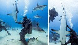 """เหลือเชื่อ นักประดาน้ำ""""สะกดจิต""""ฉลามอันตรายให้""""หลับ"""" จับให้อยู่ในท่าเด็ด (ชมคลิป)"""