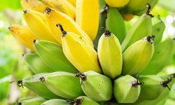 6 คุณประโยชน์ดีๆ จาก กล้วย