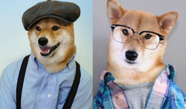 เท่ห์สุโค่ย!!! โบดี้ สุนัขนายแบบเสื้อผ้าแบรนด์หรู