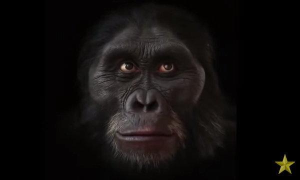 กว่าจะหน้าตาแบบนี้! ชมคลิป 60 วินาที 6 ล้านปีวิวัฒนาการมนุษย์