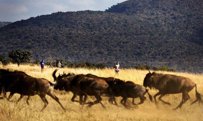 Big Five Marathon งานวิ่งมาราธอนท่ามกลางสัตว์ป่าซาฟารี